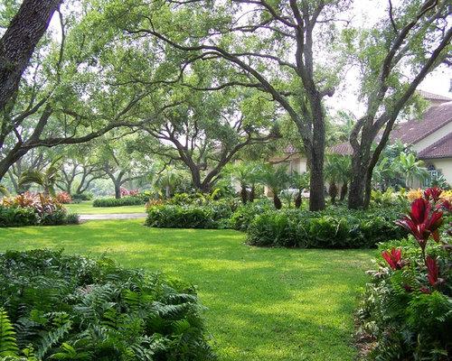 Do Ferns Grow Under Oak Trees : Under trees houzz