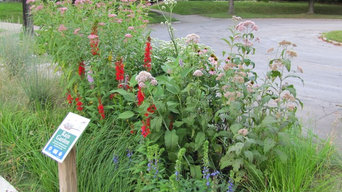 Home Landscape Using Only Native Plants