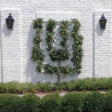 Home Orchards - Espalier Fruit Trees