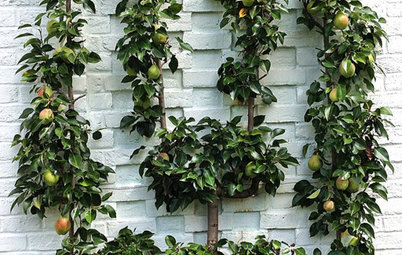 Spotted! Delightful and Space-Saving Espaliered Fruit Trees