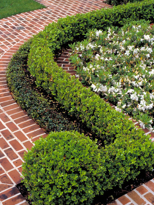 Baby gem boxwood houzz for Traditional landscape