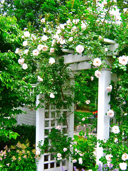 Rose Arbor Ideas Pictures Remodel And Decor