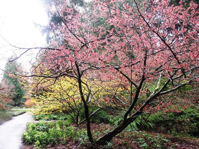 Сад by Debra Prinzing
