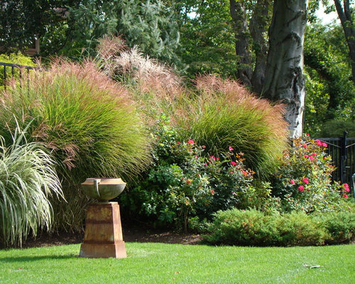 Ornamental grass border houzz for Tall grass border
