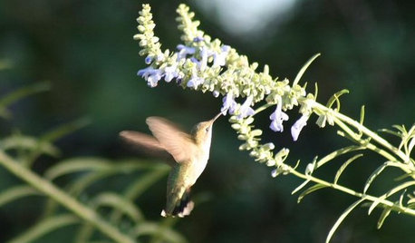 Attract Hummingbirds and Bees With These Beautiful Summer Flowers