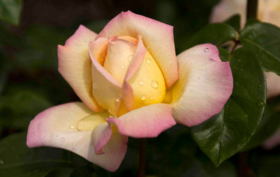 Houzz Quiz: Quale Fiore Dovresti Regalare?