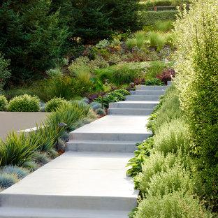 Idéer för en stor modern trädgård i full sol som tål torka och framför huset, med en trädgårdsgång