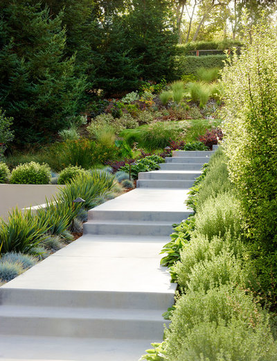 Contemporary Garden by David Thorne Landscape Architect