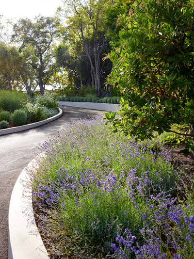 Modern Landscape by David Thorne Landscape Architect