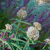 10 Top Native Plants for Southern California Gardens