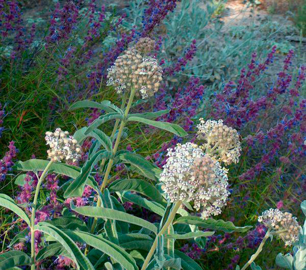 10 top native plants for southern california gardens for Southern california native plants