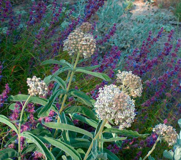 10 top native plants for southern california gardens landscape by las pilitas nursery mightylinksfo