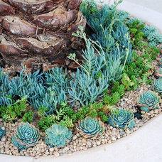 Traditional Landscape by BlueGreen Landscape Design