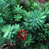 Screen Stars: 10 Hedging Plants With Punch and Panache