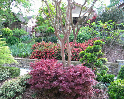 Dwarf wax myrtle home design ideas pictures remodel and for Wax landscape