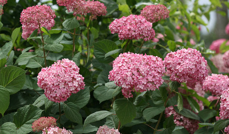 When is the Right Time to Prune Your Hydrangeas?