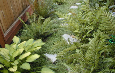 6 Great Ways With Garden Ground Covers