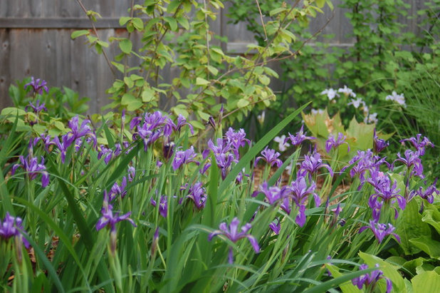 Plant irises in fall for standout spring into summer blooms benefits and tolerances as befits such a varied group of plants irises can handle a range of growing conditions and different soils although most insist mightylinksfo
