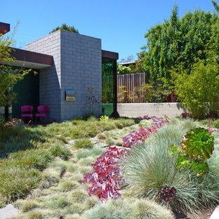 Inspiration for a contemporary backyard full sun xeriscape in Los Angeles.