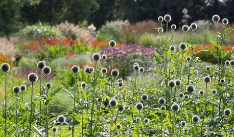 Houzz Нидерланды: Якобстуин — очаровательный сад Яапа де Вриса