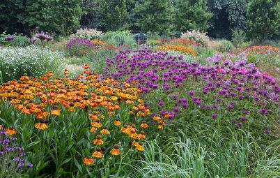 3 Sizzling Color Palettes for Summer Gardens