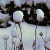 Der Garten im Dezember – was jetzt zu tun ist