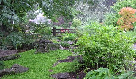 梅雨から初夏のガーデニング注意点