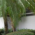 Side Yard Path To Patio Asian Landscape San