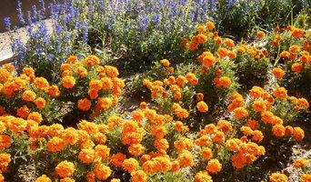 jardin de color