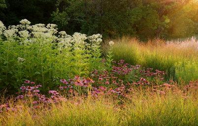 Garden for Wildlife to Reap Rich Rewards