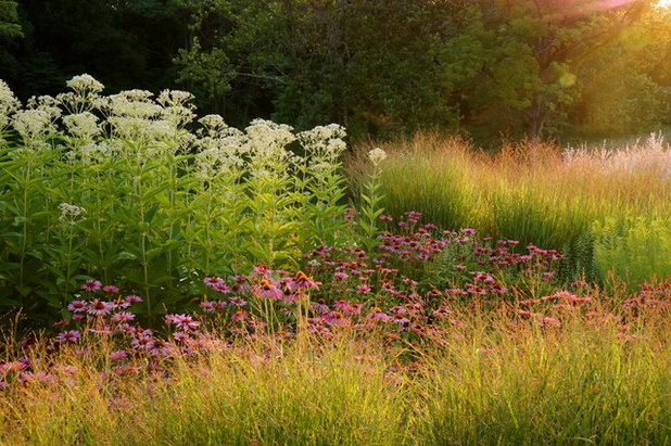 Contemporary Garden by Adam Woodruff LLC