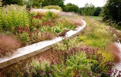 Great Design Plant: Eragrostis Spectabilis