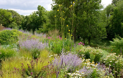 Why Your Native Plants Might Be Struggling