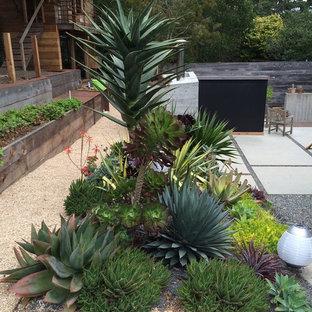 Kensington Succulent Paradise