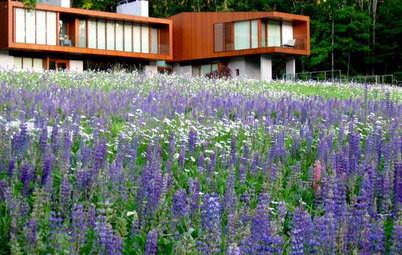 How to Grow a Modern Pollinator Garden
