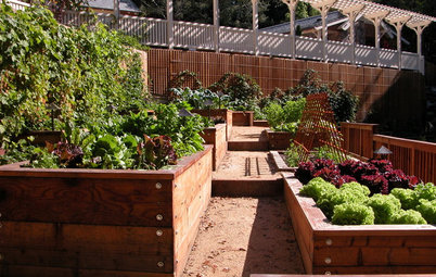 7 Tips to Ensure Success With Raised Bed Gardening