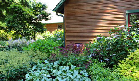 Colorful Plant Combos for Shade Gardens