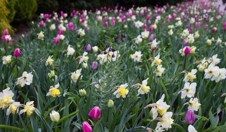 Gardening 101: What to Do After Spring Bulbs Have Bloomed