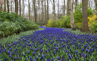 Take a Tour of an Enchanting Bulb Garden in the Netherlands