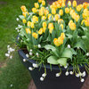 Fall Planting Guide: Plant Bulbs Now for Spring and Summer Blooms