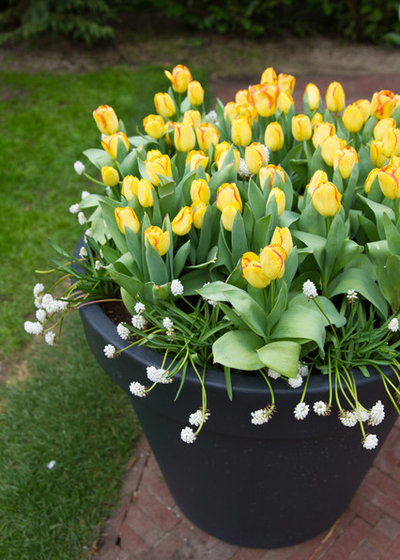 Gardening 101 what to do after spring bulbs have bloomed landscape by lauren dunec design mightylinksfo