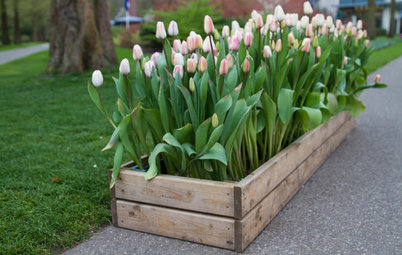 What to Know About Using a Wooden Crate as a Planter Box