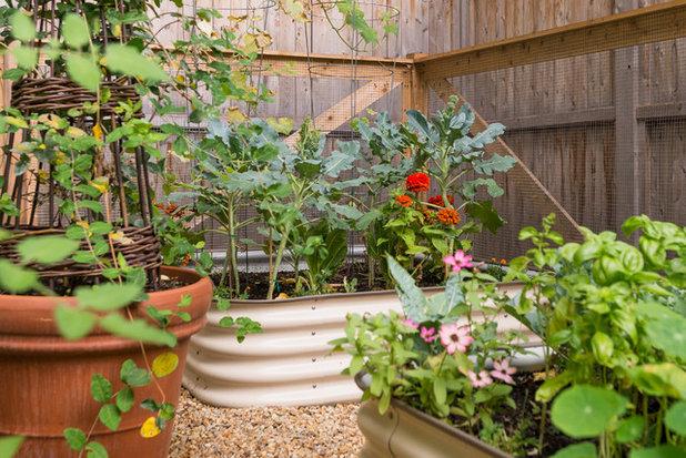 Farmhouse Garden by Danielle Sykes