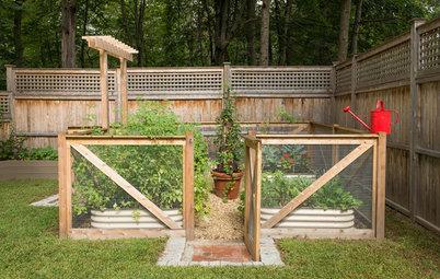 10 Beautiful Small Edible Gardens