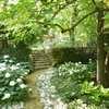 What Will Grow in a Shady Garden (and How to Care For It)