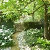 Increase Your Chance of Shade-Garden Success