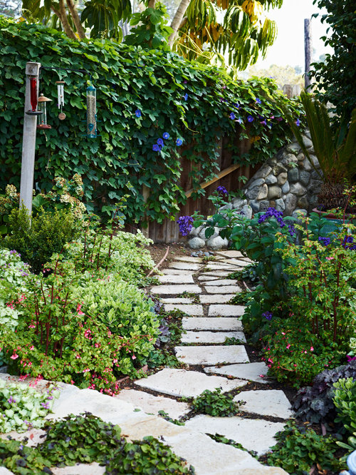 Perennial Morning Glory Vine Home Design Ideas Pictures