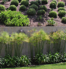 contemporary landscape by Studio H Landscape Architecture