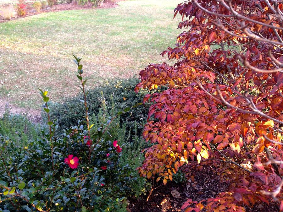 Lake near Fredericksburg, VA:  Plant&Sustain for Clean Water