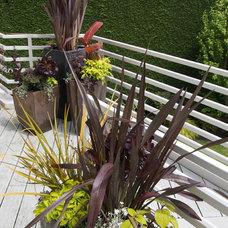 Modern Landscape by Root Design & Landscape